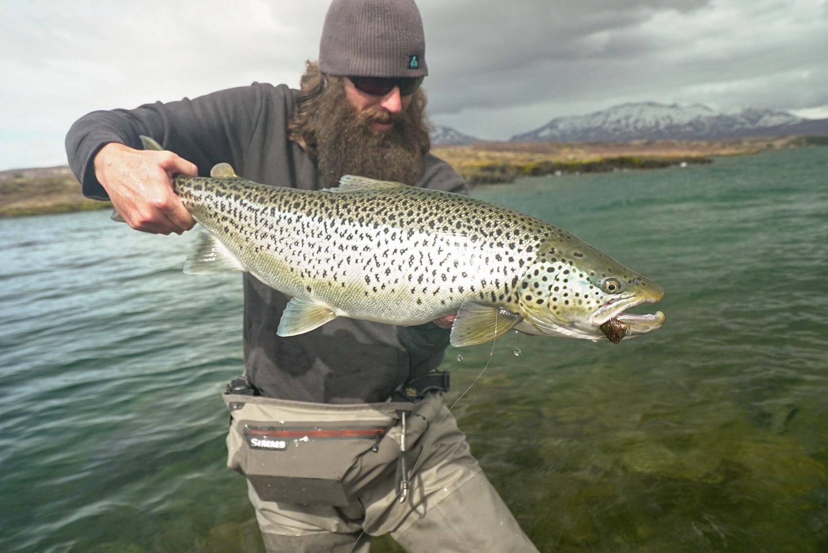 Þingvellir monster trout lax a angling club